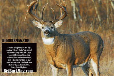 big buck magazine